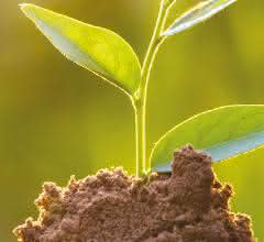 Häufchen Erde mit Pflanze