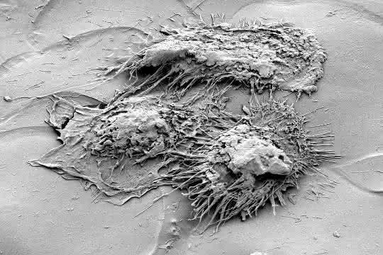 Immunzellen