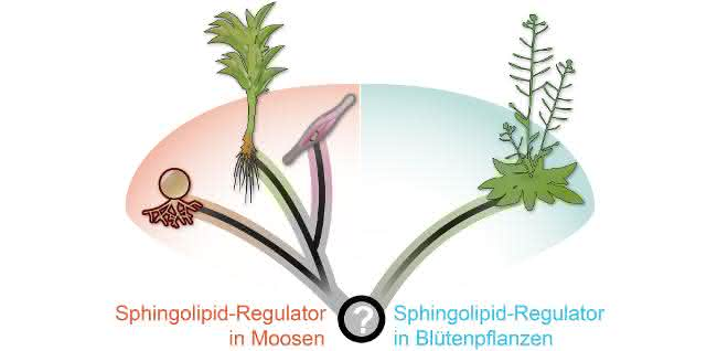 Grafik Regulation von Sphingolipiden