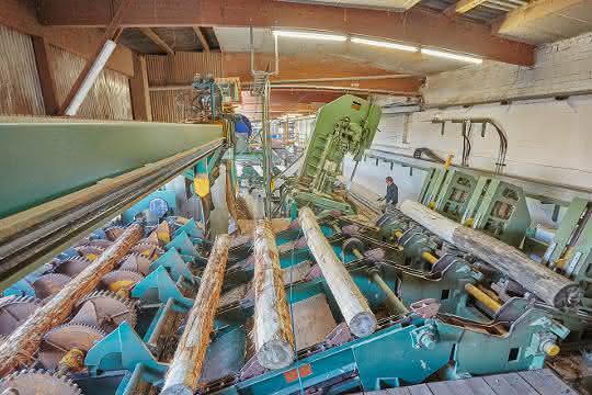 Steigende Holzpreise stellen Herausforderung für die Palettenlogistik dar