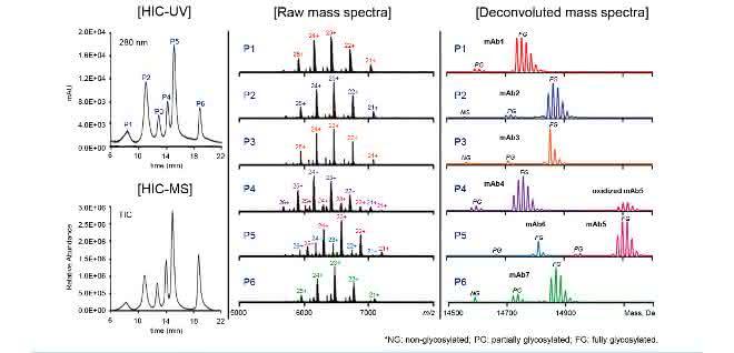 UV- und MS-Chromatogramm und Massenspektren einer MAb-Mischung