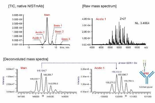 Chromatogramm und Massenspektren NIST MAbs