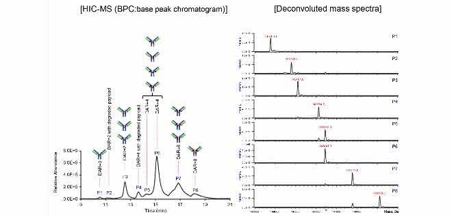 Chromatogramm und Massenspektren des SigMAb ADC Mimics