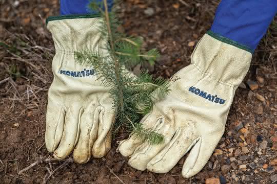 100.000 Bäume von Komatsu