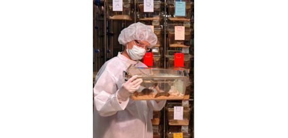 PEI-Mitarbeiterin mit Labormäusen. (Bild: PEI/Boller)