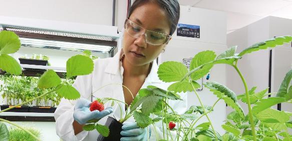 Wissenschaftlerin untersucht Erdbeerpflanzen im Forschungslabor für Pflanzenpathologie der Division Crop Science von Bayer.