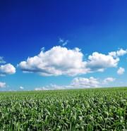Märkte + Unternehmen: Datenaustausch: Lieferantenintegration per Cloud