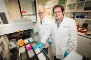 Krankheitsforschung ohne Umwege: Schneller zum Modellorganismus